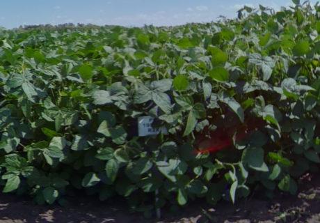nutrien-pv_19s006r2x_soybeans
