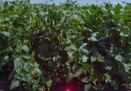 nutrien-pv_22s002r2x_soybeans